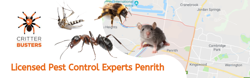 Licensed Pest Control Experts Penrith